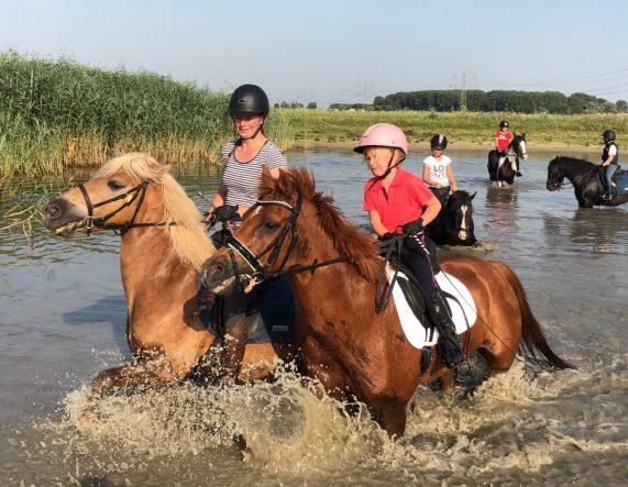 Paarden spelen in het water